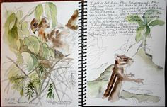 Sketching in Nature: Feeling Like A Chipmunk