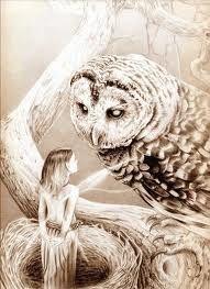 Owls annnd fairies!!