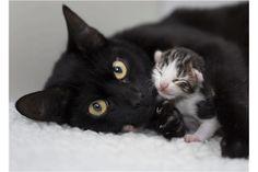 Meet Zsa Zsa at Cats Protection!