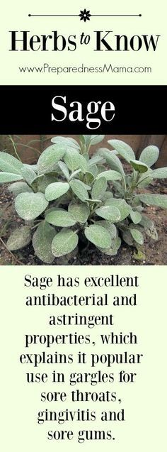 Herbs to Know: Sage. It has antibacterial and astringent properties, which explains it popular use in gargles for sore throats, gingivitis and sore gums |  http://www.herbalswirl.com