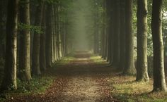 forest-7.jpg (5184×3192)