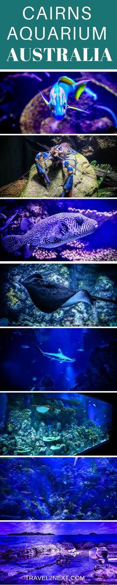 Cairns Aquarium – From Rainforest To Reef. A fantastic attraction in Cairns, Queensland, Australia. #AustraliaTravelKids