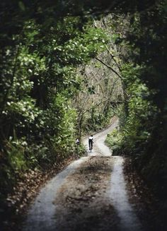 Beautiful road for a ride - reminds me of riding a bike as a kid. re-pinned by NaplesBestAddresses.com.