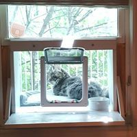Stryker of Toronto enjoying his day in his Cat Solarium. It is the ultimate cat window enclosure.