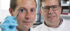 Un grupo de científicos asegura haber creado la primera córnea artificial impresa en 3D usando células humanas