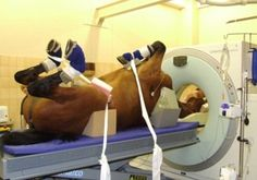 CT scanners usually used by zoos and vet for horses could help scan obese human patients.