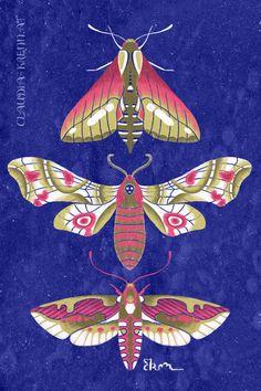 Digital Illustration. Flora And Fauna, Digital Illustration, Moth, Rooster, Digital Art, Watercolor, Painting, Animals, Pen And Wash