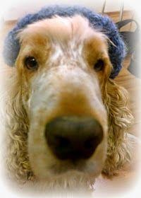 Arkimamman Arkiralli: Mummi kutoo hunajaa Dogs, Animals, Animales, Animaux, Pet Dogs, Doggies, Animal, Animais