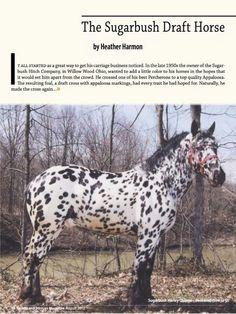 Sugarbush Draft Horse