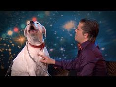 Dog's Performance Shocks The Judges