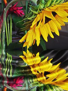 sunflowersandsearchinghearts:    ~everyday i give to myself a sunflower… <3~