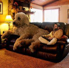 もしも犬が馬よりデカかったら……という空想を現実にした合成写真19枚
