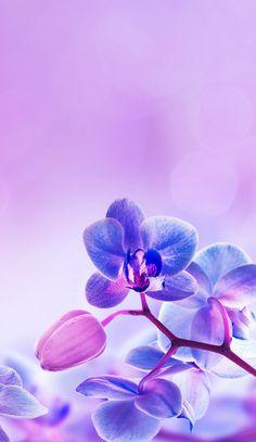 """Képtalálat a következőre: """"orchid wallpaper"""" Orchid Wallpaper, Purple Flowers Wallpaper, Of Wallpaper, Wallpaper Backgrounds, Best Iphone Wallpapers, Pretty Wallpapers, Fall Flowers, Blue Flowers, Orchid Flowers"""