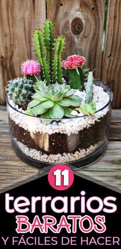 Succulent Bowls, Succulent Bonsai, Succulent Arrangements, Indoor Cactus Garden, Patio Plants, Cactus Terrarium, Cactus Plants, Glass Terrarium, Growing Succulents
