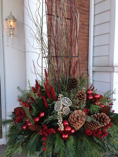 Image result for birch christmas evergreen