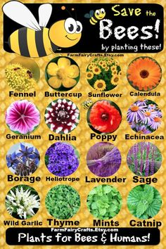 Save the #Bees! Plant These & More to Attract Bees... http://www.fix.com/blog/bring-back-the-bees/ …     #SaveBees
