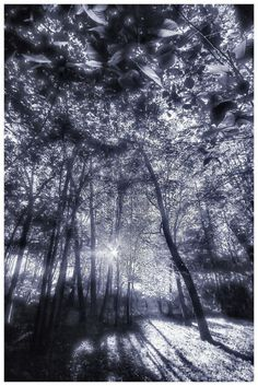 Enchanted Forest by aquapell on @DeviantArt