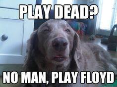 Go with Floyd!