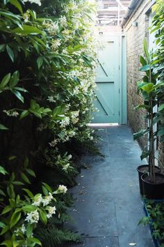 Choose scented plants in a garden for entertaining Garden Paths, Garden Art, Garden Design, Garden Ideas, Clematis, Privacy Plants, How To Grow Taller, Tall Plants, Chelsea Flower Show