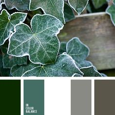 color palette - ivy frost hues