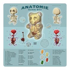 Piñata Anatomy 101: When Your Organs Are Made of Sweet, Sweet Candy - New York - Restaurants and Dining - Fork in the Road