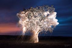 For his series of experimental photography titled Impermanent Sculptures, photographer Vitor Schietti worked with fireworks and long-exposure photography to illuminate the branches and stems of trees … Light Painting Photography, Art Photography, Amazing Photography, Exposure Lights, Long Exposure Photos, Experimental Photography, Colossal Art, Exposure Photography, Fine Art Photo