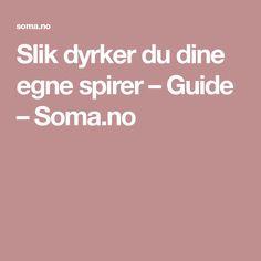 Slik dyrker du dine egne spirer – Guide – Soma.no