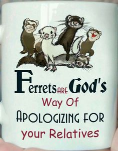 I don't really believe in God but I still accept Ferret Cage, Pet Ferret, Pet Cage, Baby Ferrets, Funny Ferrets, Baby Animals, Funny Animals, Cute Animals, Ferret Tattoo