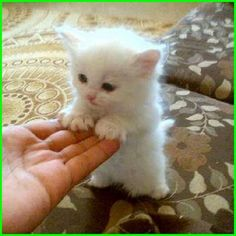 Cute Kittens And Puppies Images Cute Cats And Dogs Doing Funny Things Kittens And Puppies, Cute Cats And Kittens, I Love Cats, Crazy Cats, Adorable Kittens, Kitty Cats, Kittens Meowing, Ragdoll Kittens, Bengal Cats