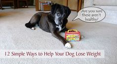 Take this 10 second test to find out if your dog is overweight. Also, discover easy ways to help your pup shed those extra pounds and live a healthier life. #dogs #obesity #dieting