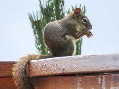Squirrel, Rodent, Animal, Wild Life