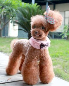 Lace and Sequin Bow Collar http://shop.poochitoutou.com/collars-leashes/lace-and-sequin-bow-collar.html