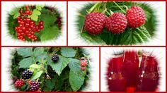 Vorratshaltung: Fruchtsäfte selber machen