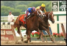 RAGS TO RICHES and CURLIN......remembering 139th Belmont Stakes