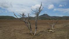 De opgedroogde zoutvlaktes van het Christoffelpark North Coast, Flora, Country Roads, Van, Plants, Vans, Vans Outfit