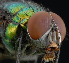 Macro Fly.