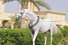 Pretty Arabien