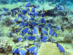 モルディブの無人島からスノーケリングで出逢えるお魚の群れ。