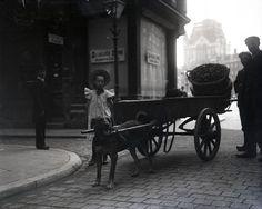 """""""Dog cart"""" - Holland, 1915"""