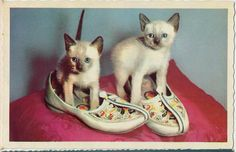 siamese kittens in shoes (1958 postcard), via janwillemsen on flickr