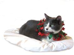 Girl #fkq #holiday #pets