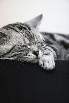 #Cats #Katzen #Animal #Cute #Fluffy #Katzenliebe #Samtpfote