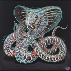 Watch a snake digest a rodent in graffiti artist Nychos the weird's solo show.