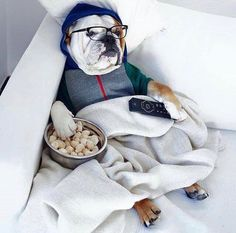 We wish we could relax on the same level as this English Bulldog. www.bullymake.com Pinterest//tianchilla13