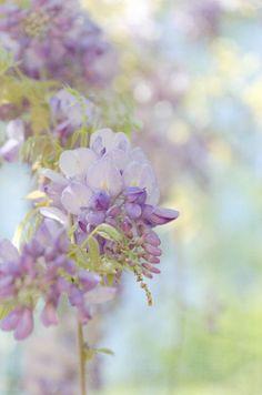 purple blooms....