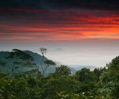 World's most endangered sites: Colombia: Los Katíos National Park