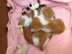 Sleeping pile of babies! Too cute