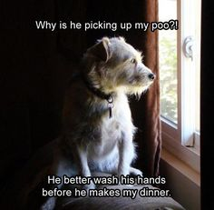 21 Funny Animal Pictures for Your Wednesday