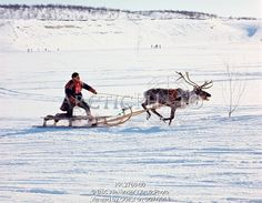 Sami man drives his reindeer sled at the Easter Reindeer Races, Kautokeino, Norway.