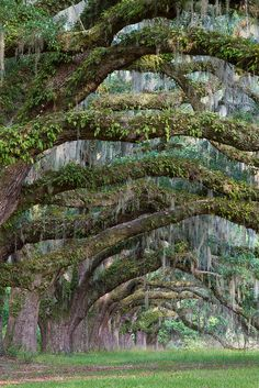 Aren't those old, Spanish moss draped live oaks great? These are near Charleston SC.